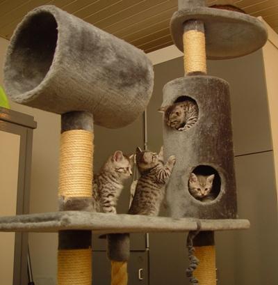 waarvoor gebruiken katten een krabpaal